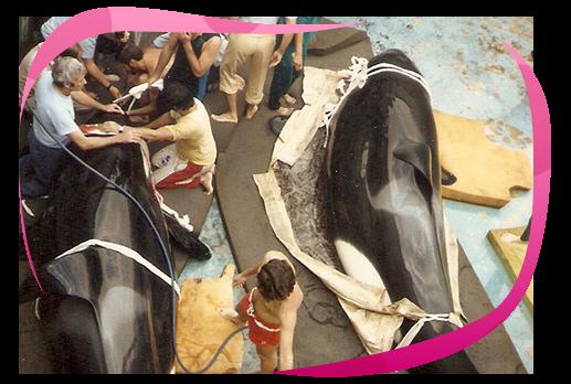 Conheça a história da maior atração do Playcenter, a Orca Show